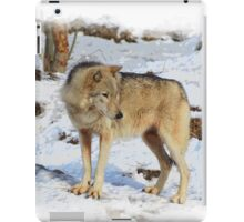 Grey Wolf in Snow Winter Scene iPad Case/Skin