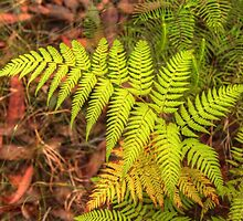The Fern .. Nature's Awesome Design by Michael Matthews