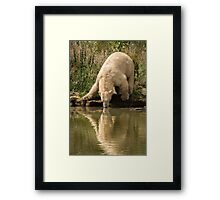 Polar bear with reflection Framed Print