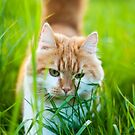 Cat out for hunting by netza