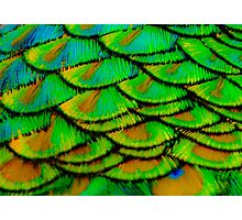 Peacock feather armour Photographic Print