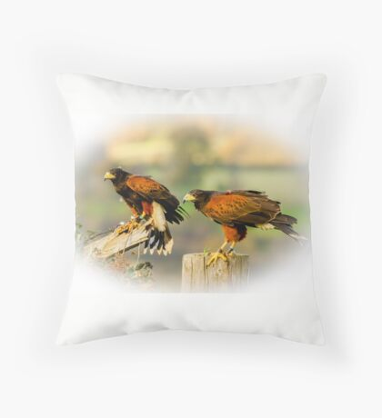 Pair of Harris Hawks Throw Pillow