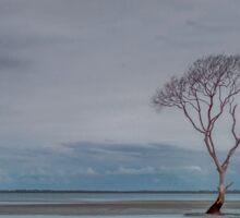 Beachmere Blue - Qld Australia Sticker