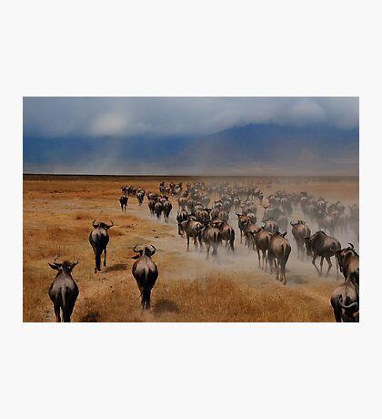 Africa IV Photographic Print
