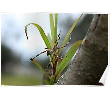 Orb Weaver Spider on a Plant Poster