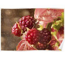 painted raspberries Poster