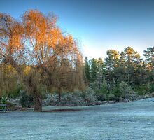 Frosty Morning by Steve Randall