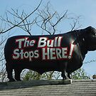 Bull on Roof by Karen Checca