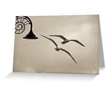 Seagulls in Lyme Regis Greeting Card