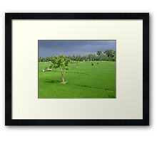 Storms Approaching Rice Fields in Ubud, Bali Framed Print