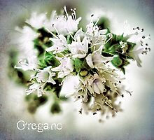 Oregano Card by © Kira Bodensted