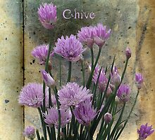 Chive card by © Kira Bodensted