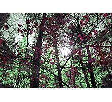 Colourful, Mystical Trees Photographic Print