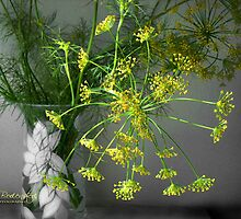 Dill card by © Kira Bodensted