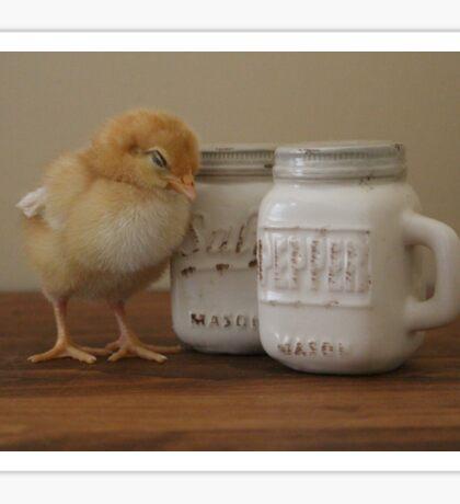 Chicks Love Salt and Pepper Sticker
