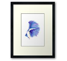 Watercolour Betafish Framed Print