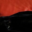 Black Stripe Cat by Jeremy Evans