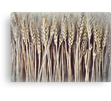 Dried Wheat Sheaf  Canvas Print