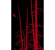 Freaky Forest Photographic Print