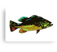 Peacock Bass Canvas Print