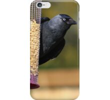 Jackdaw on bird feeder  iPhone Case/Skin