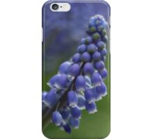 Grape Hyacinth iPhone Case/Skin
