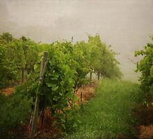 Grape Vines by laughlovephoto