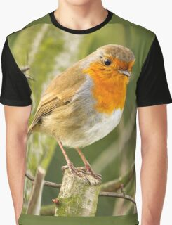 Beautiful Robin Redbreast Bird Graphic T-Shirt