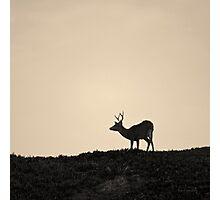 Mule Deer Toned Photographic Print