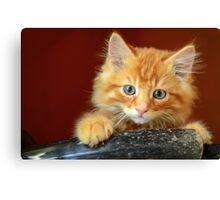 Ginger Kitten Canvas Print