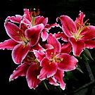 Lilies by Aase