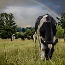 Rainbow Cow by liberthine01