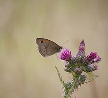 Meadow Brown Butterfly by Gill Langridge
