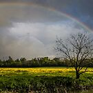 Rainbow Fields by liberthine01