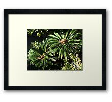 His and her palm trees Framed Print