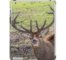 Nosy Red Stag deer iPad Case/Skin