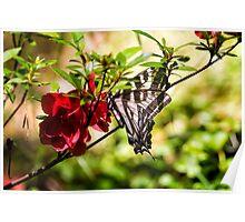 Butterfly on an Azalea Poster