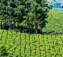 Munnar Tea Plantation. Sticker