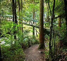 Walking track   New Zealand by sandysartstudio