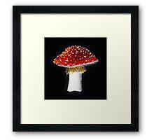 Amanita Muscaria - Fly Agaric Mushroom Print Framed Print