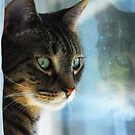 Tabby cat reflections  by jodi payne