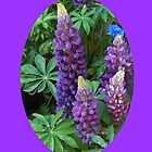 Oval Lupins Vignette by kathrynsgallery