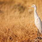 Egret on the lookout by Owed to Nature