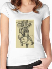 Vintage Anatomical Heart Women's Fitted Scoop T-Shirt