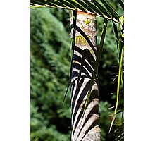 Palm tree patterns Photographic Print