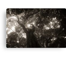 Rainforest Canopy BW Canvas Print