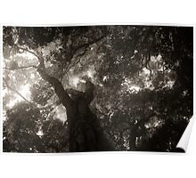 Rainforest Canopy BW Poster