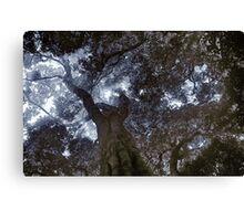 Rainforest Canopy Enhanced Canvas Print