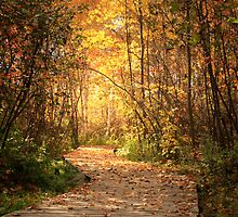 Northern trails by Janet Gosselin