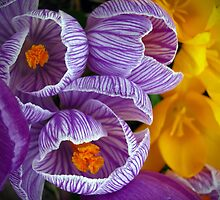 Spring blooms by Janet Gosselin